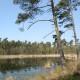 Landgoed Twickel, bossen en vennen
