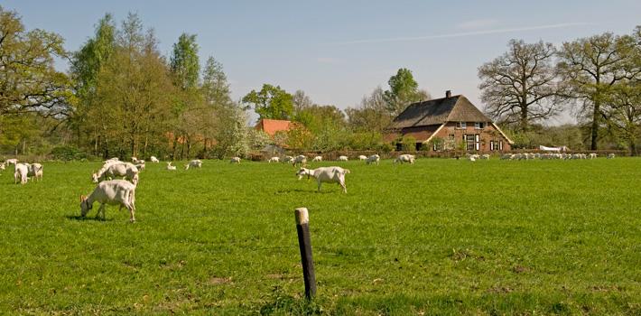 Geitenboerderij Twickel